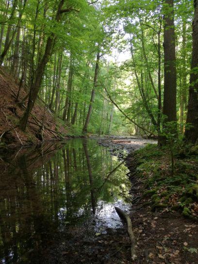 Rzeka Punkva plynąca przez Morawski Kras